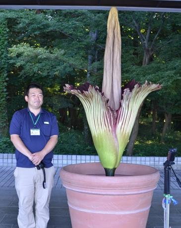 都立神代植物公園で、世界最大の花といわれる「ショクダイオオコンニャク」が開花(7月22日6時撮影)。隣は神代植物公園の職員・身長170センチメートルの長尾さん。