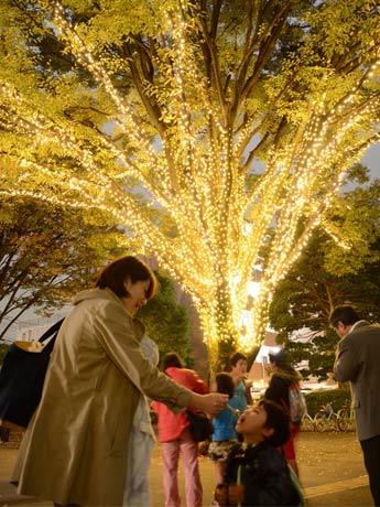 狛江の3カ所でイルミネーション 約2万球のLED点灯