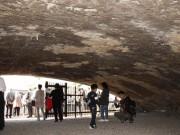 府中の「白糸台掩体壕」で被爆二世アオギリを植樹 平和都市宣言30周年で