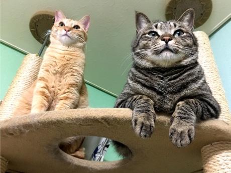 「猫付きマンション」に暮らす猫たち
