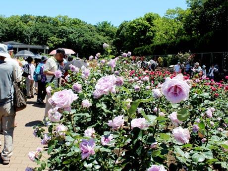 調布・神代植物公園で「春のバラフェスタ」 香り楽しむ催しも