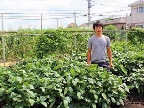 枝豆に囲まれる伊藤農園の伊藤彰一さん