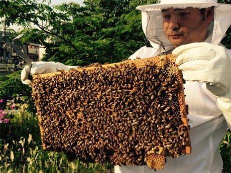 巣箱の中には約2万匹のみつばちが。元気なみつばちの姿には癒し効果も