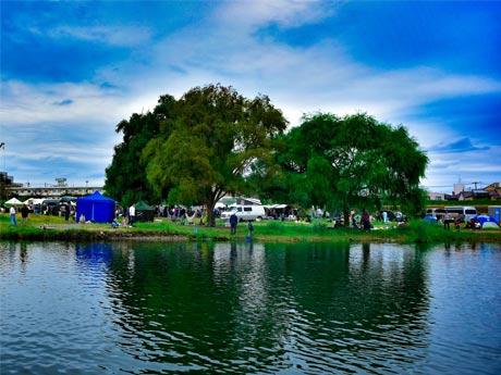 河川敷のシンボルツリー「大きなヤナギの木」と多摩川