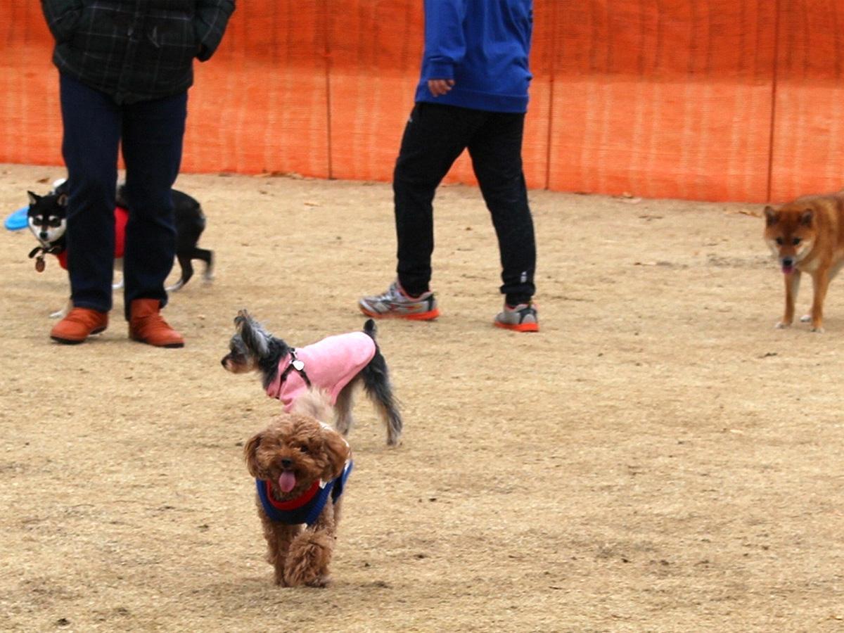 ドッグガーデンで遊ぶ愛犬たち