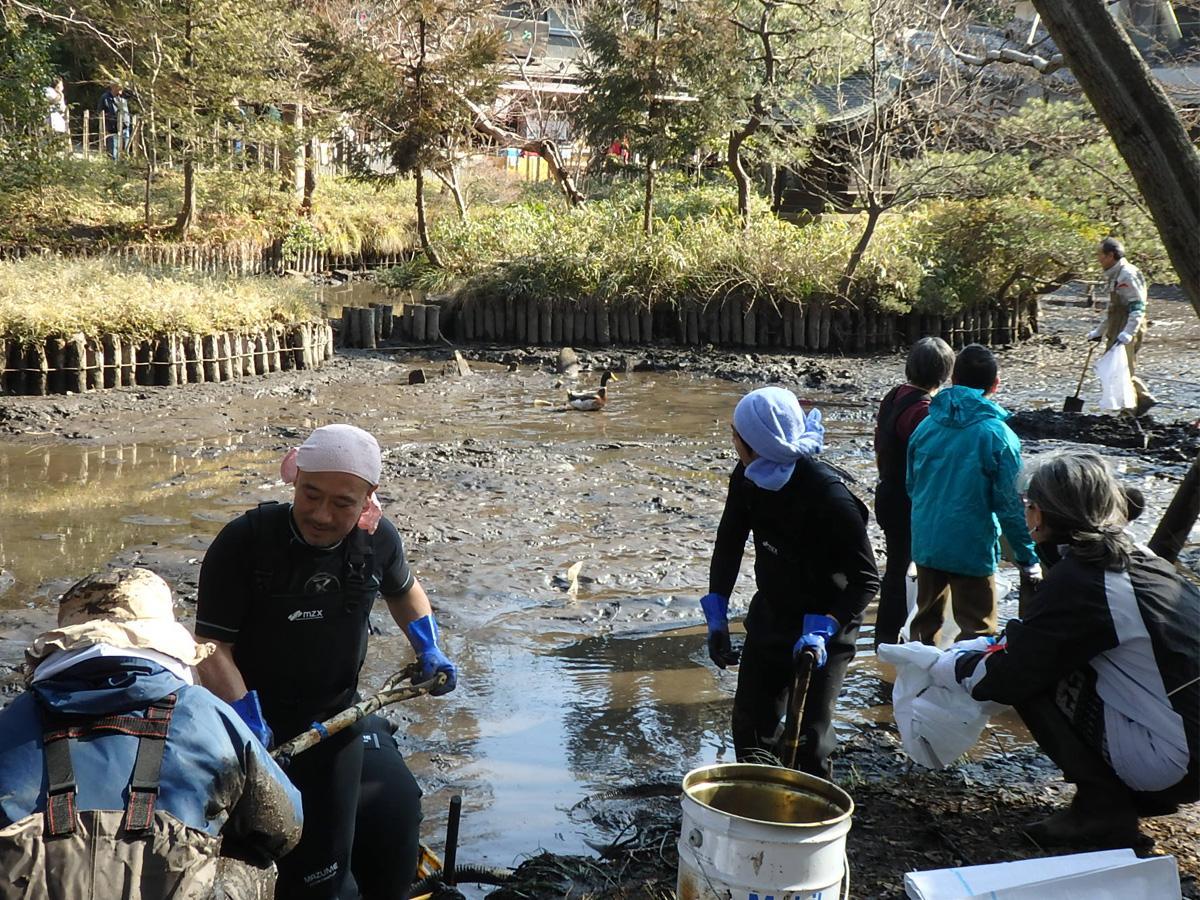 水を抜いた弁天池のヘドロをすくう地元住民、後ろを歩くマガモに手を止めるボランティア