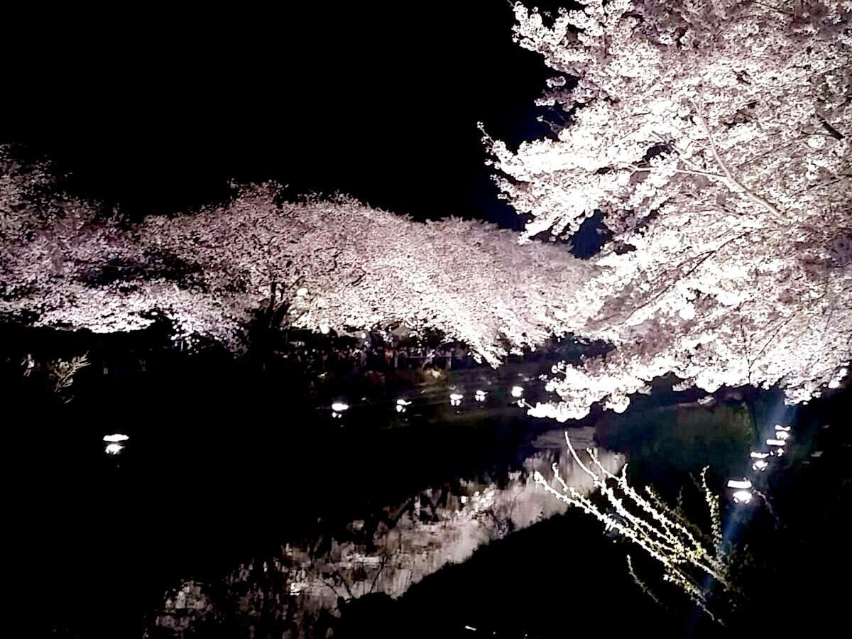 「野川桜ライトアップ」の様子