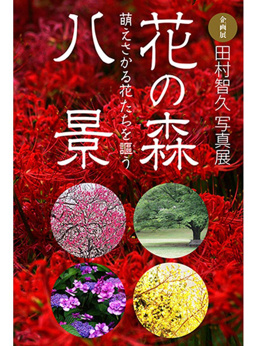 企画展「田村智久写真展 花の森八景 萌えさかる花たちを謳う」