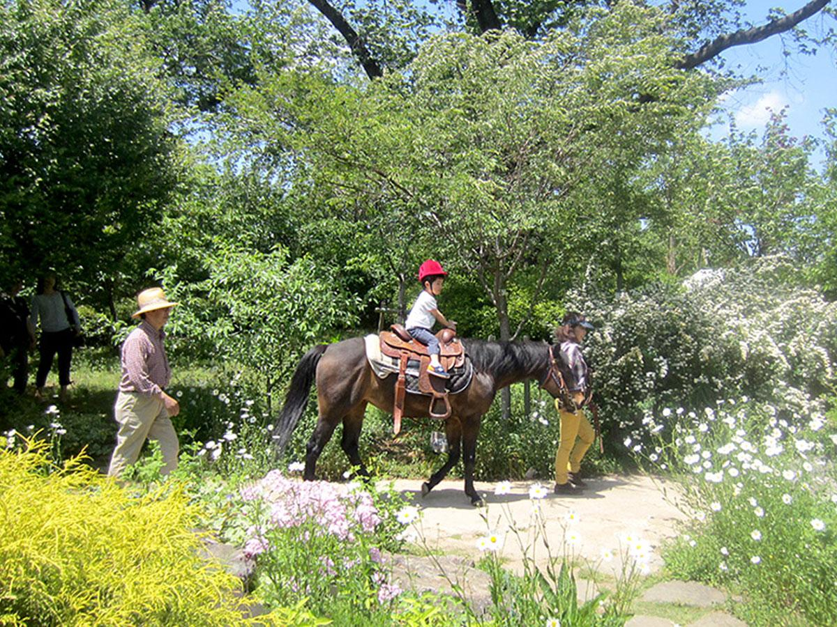 調布・アンジェでマグノリア満開に 欧風庭園無料開放、開園17周年で