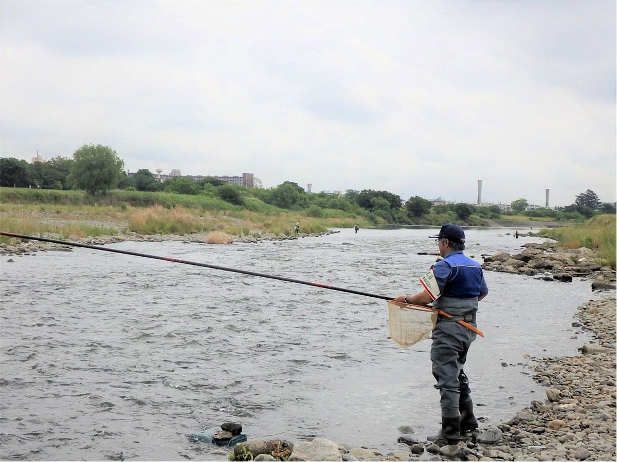 多摩川、二ヶ領上河原堰付近でのアユ釣りの様子