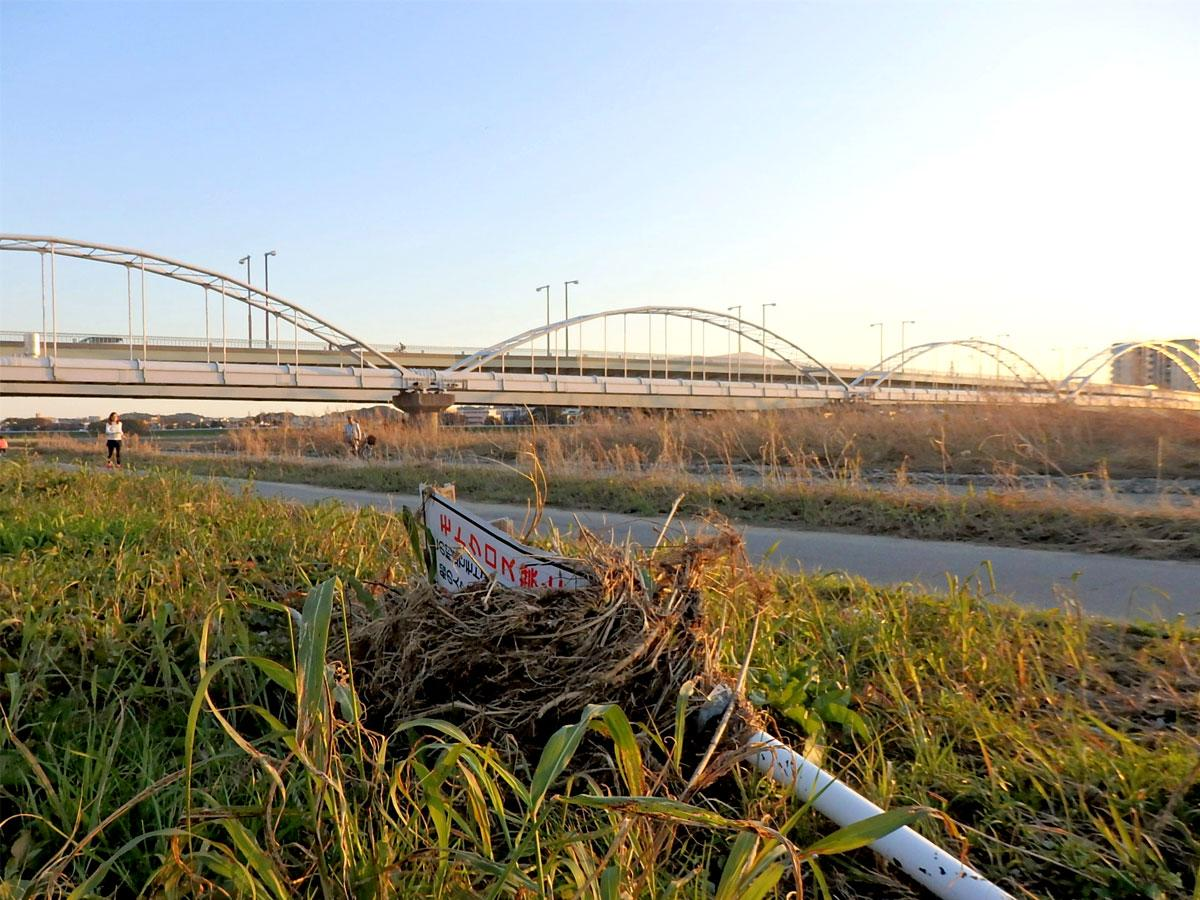 倒れたままの「モトクロス禁止」看板、多摩川原橋付近