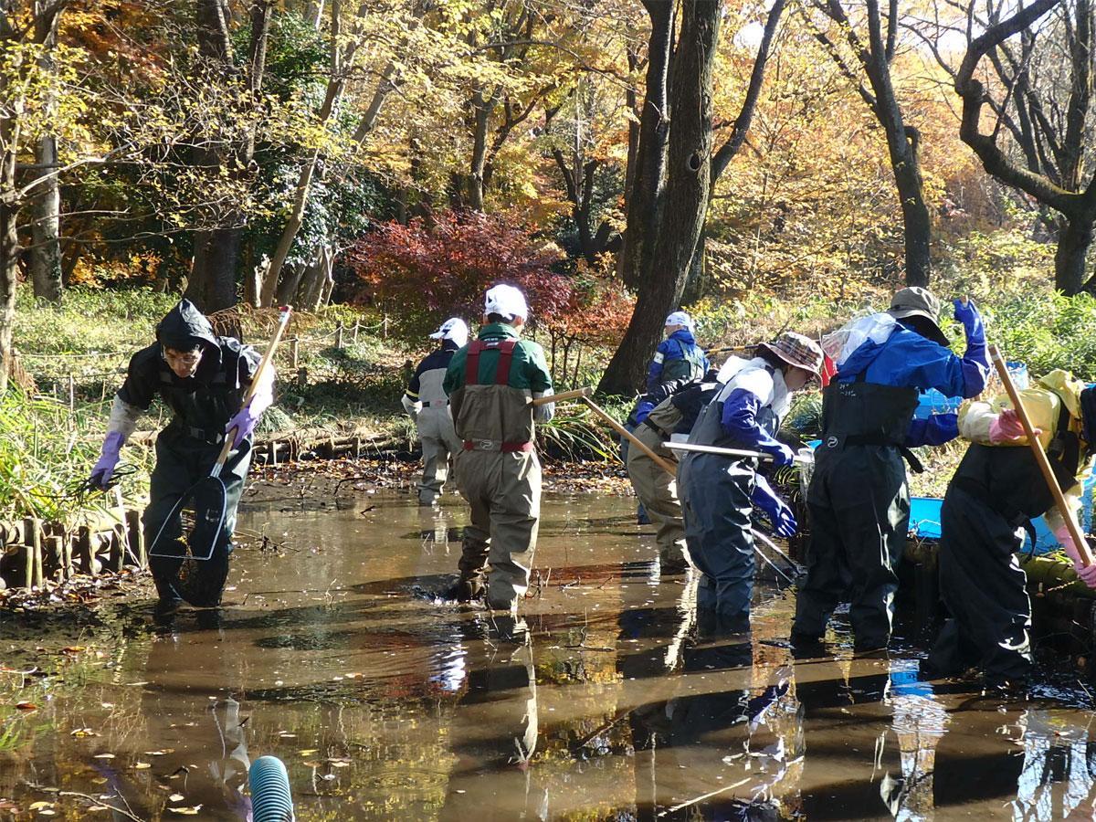 野川公園・自然観察園内「ひょうたん池」でのかいぼりの様子