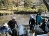 調布・深大寺で初の「かいぼり」 水質改善へ最終作業、水神信仰の池よみがえり