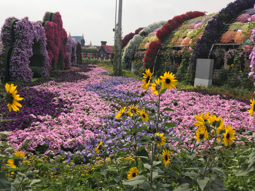 ヒマワリなどのたくさんの花で彩られた園内