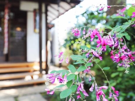 かわいらしい萩の花