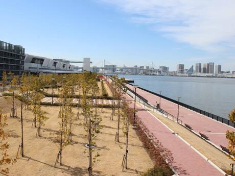 豊洲ぐるり公園(北側)