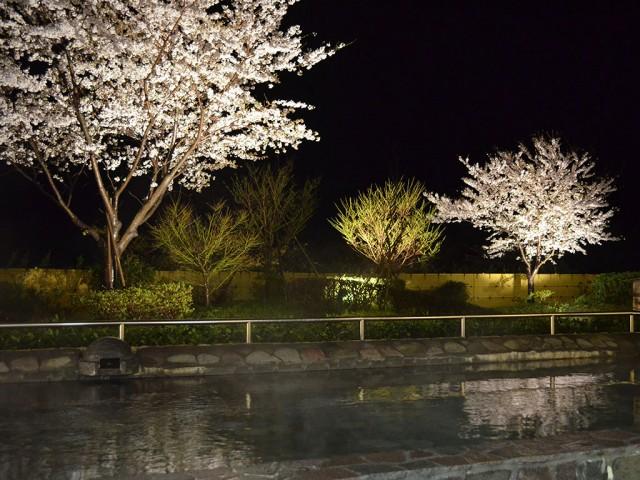 天然温泉の大浴場で夜桜を楽しめる