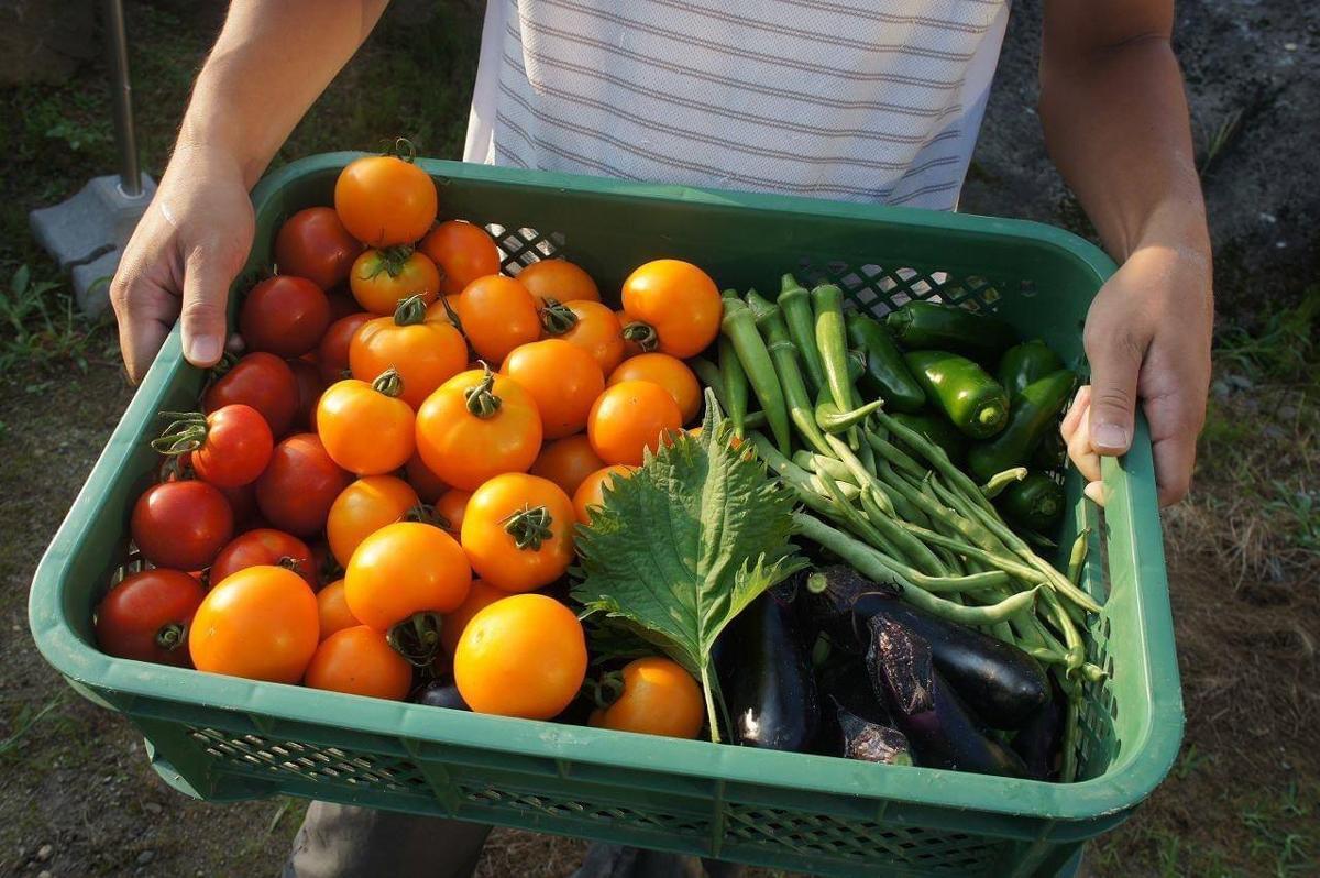 販売予定の夏野菜の一例(画像提供=FRIDAY SCREEN)