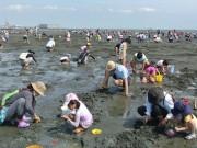 ふなばし三番瀬海浜公園の潮干狩り開始がまもなく 4月9日からスタートへ