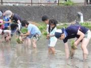 いすみ市などで「家族米作り体験」企画 船橋の米店が主催