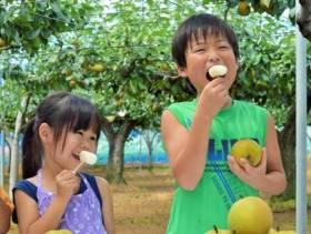 一番梨の試食会で子どもたちが試食