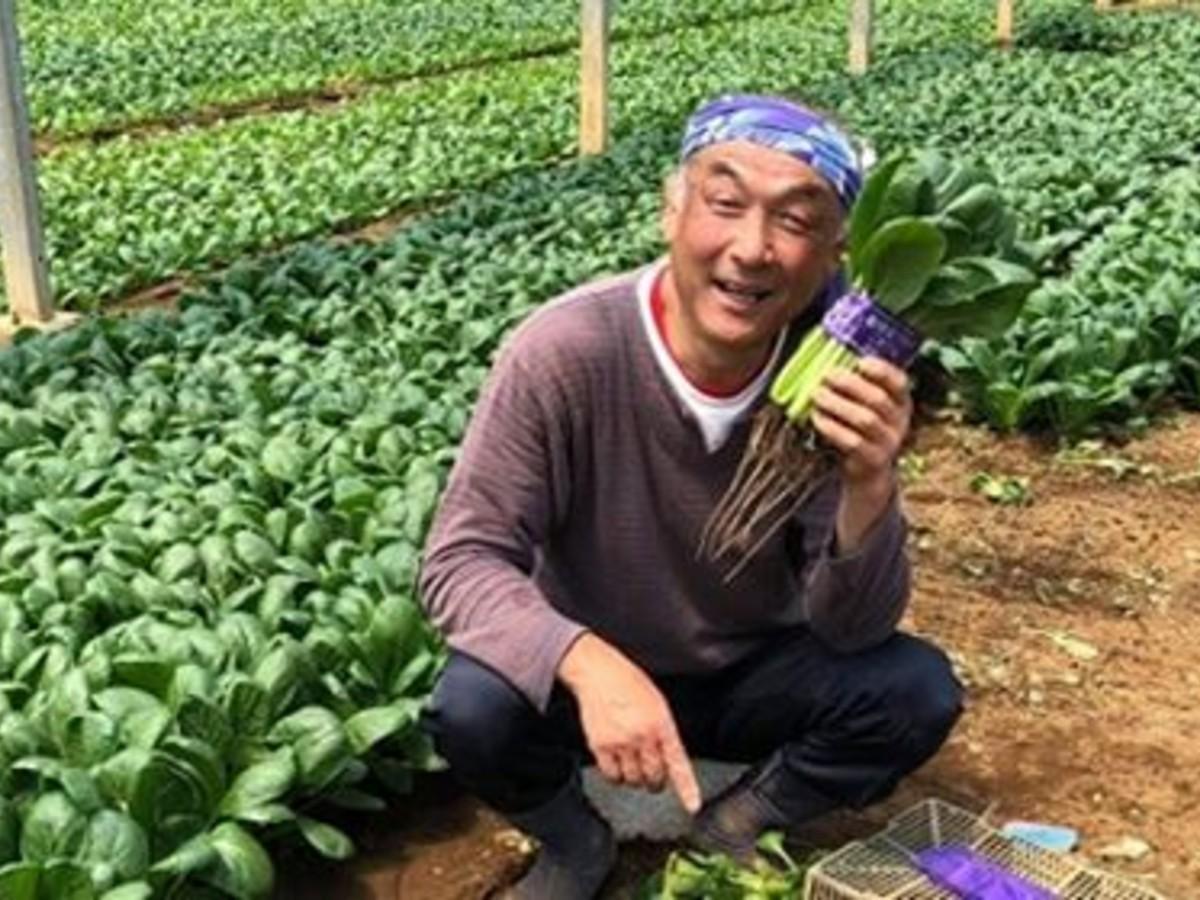 小松菜を手にする平野代一さん