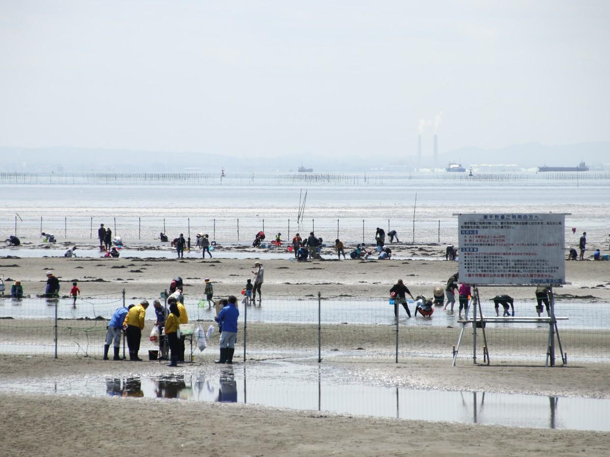 ふなばし三番瀬海浜公園の潮干狩り会場