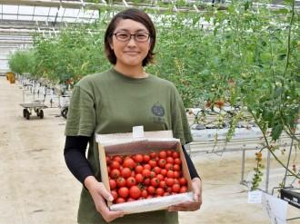 船橋「三須トマト農園」、トマトオーナー制度開始 トマトの発送や収穫体験も