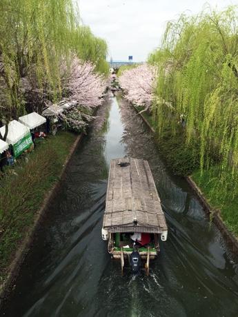 桜まつりの中、運行が始まった三十石舟