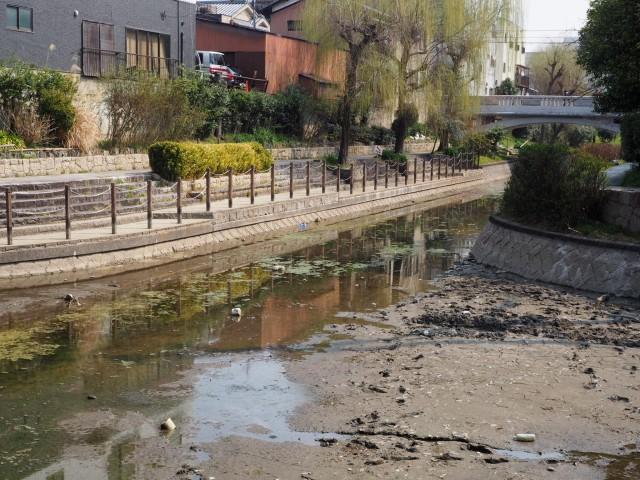 伏見で宇治川派流の生態観察ウォーク 水路の歴史や生き物をガイドが解説