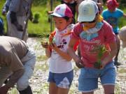 伏見「宝酒造」が「田んぼの学校」 子どもらが自然や命のつながり学ぶ