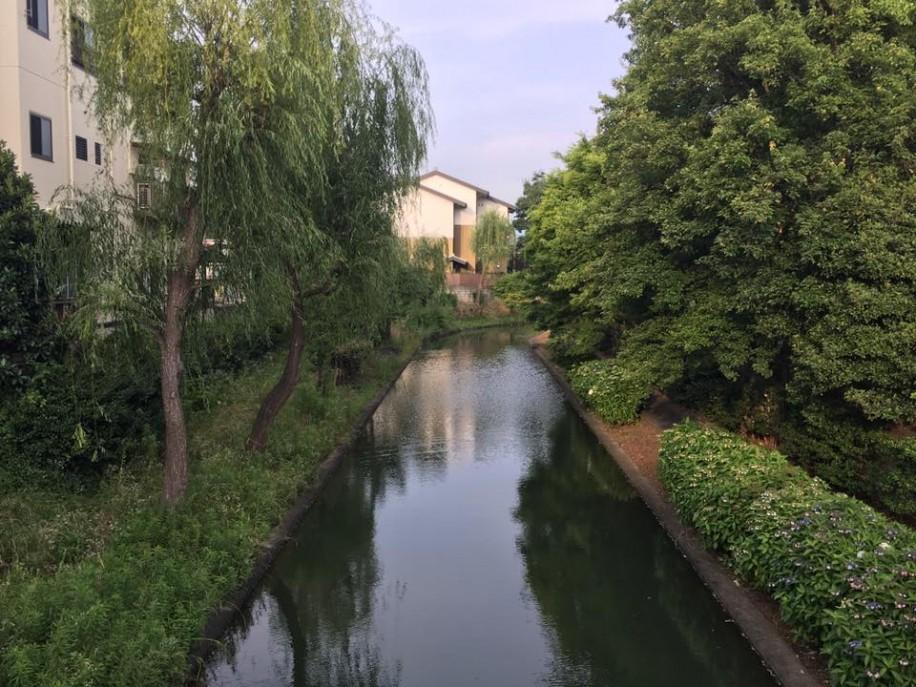 伏見区を流れる宇治川派流 伏見区は河川や運河が縦横無尽に流れている