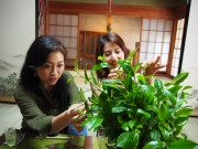 京都・和束の茶農家民宿、オープンに先駆けランチ営業始める