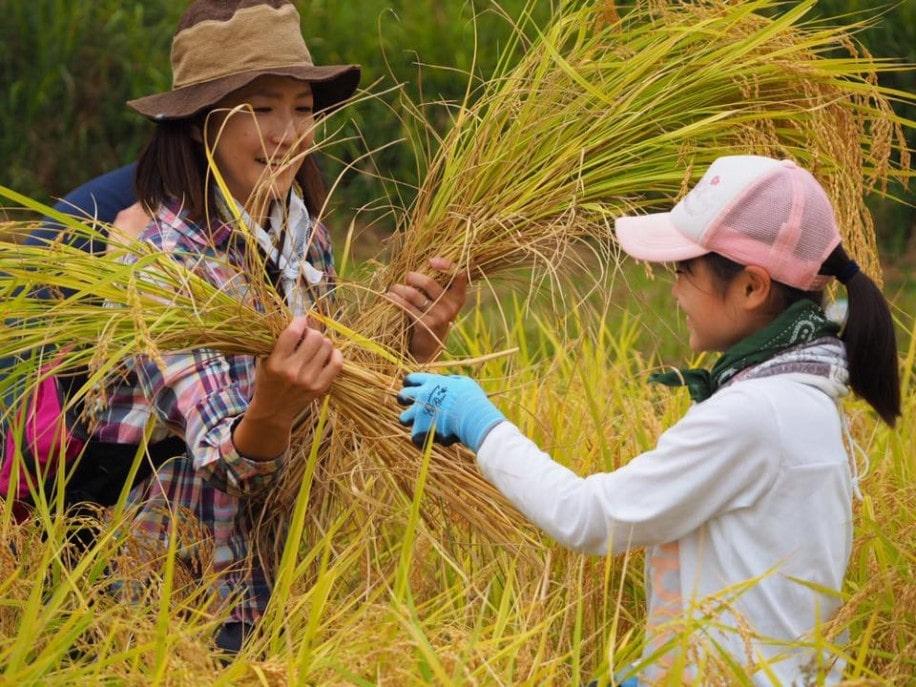 笑顔で収穫する参加者ら