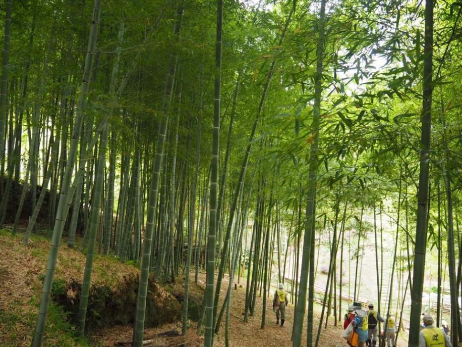「深草ふれあい農業体験団」が整備した伏見区深草の竹林