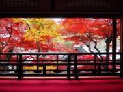 長岡京の紅葉が見ごろ レストランバスにお寺の体験イベントや御朱印ライブも