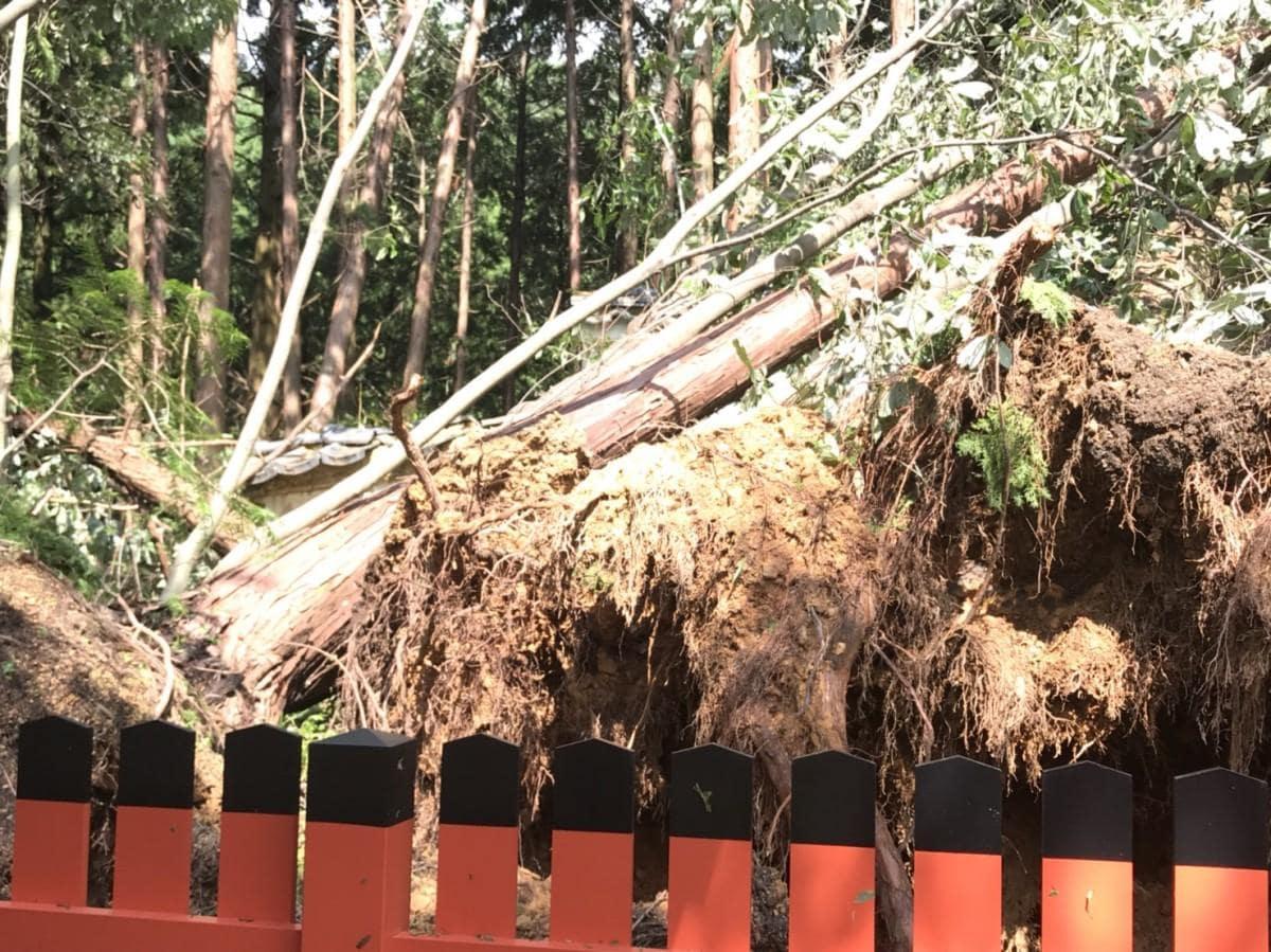 倒木や石塔倒壊などの被害が発生した柳谷観音・楊谷寺