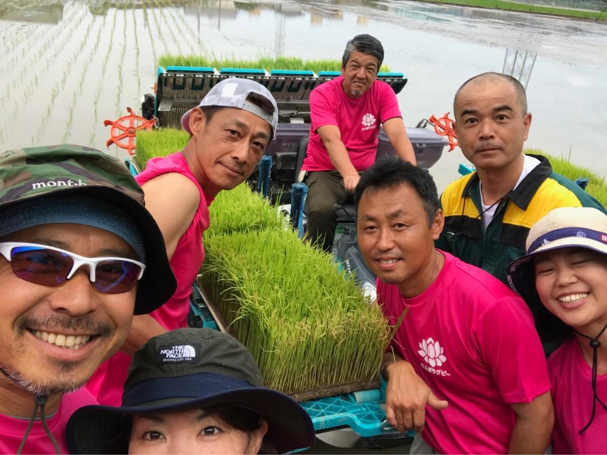 6月に行われたたんぼラグビー米の田植え