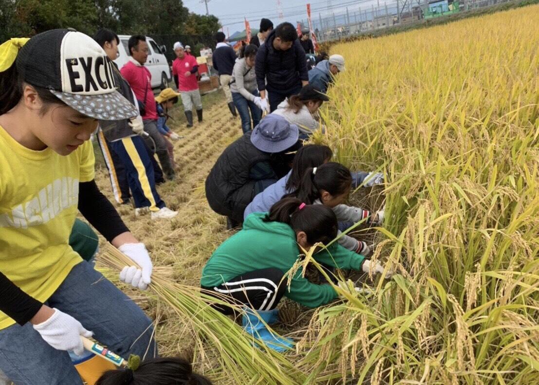 たんぼラグビー米の稲刈り、地域の子どもや学生ら58人が参加した