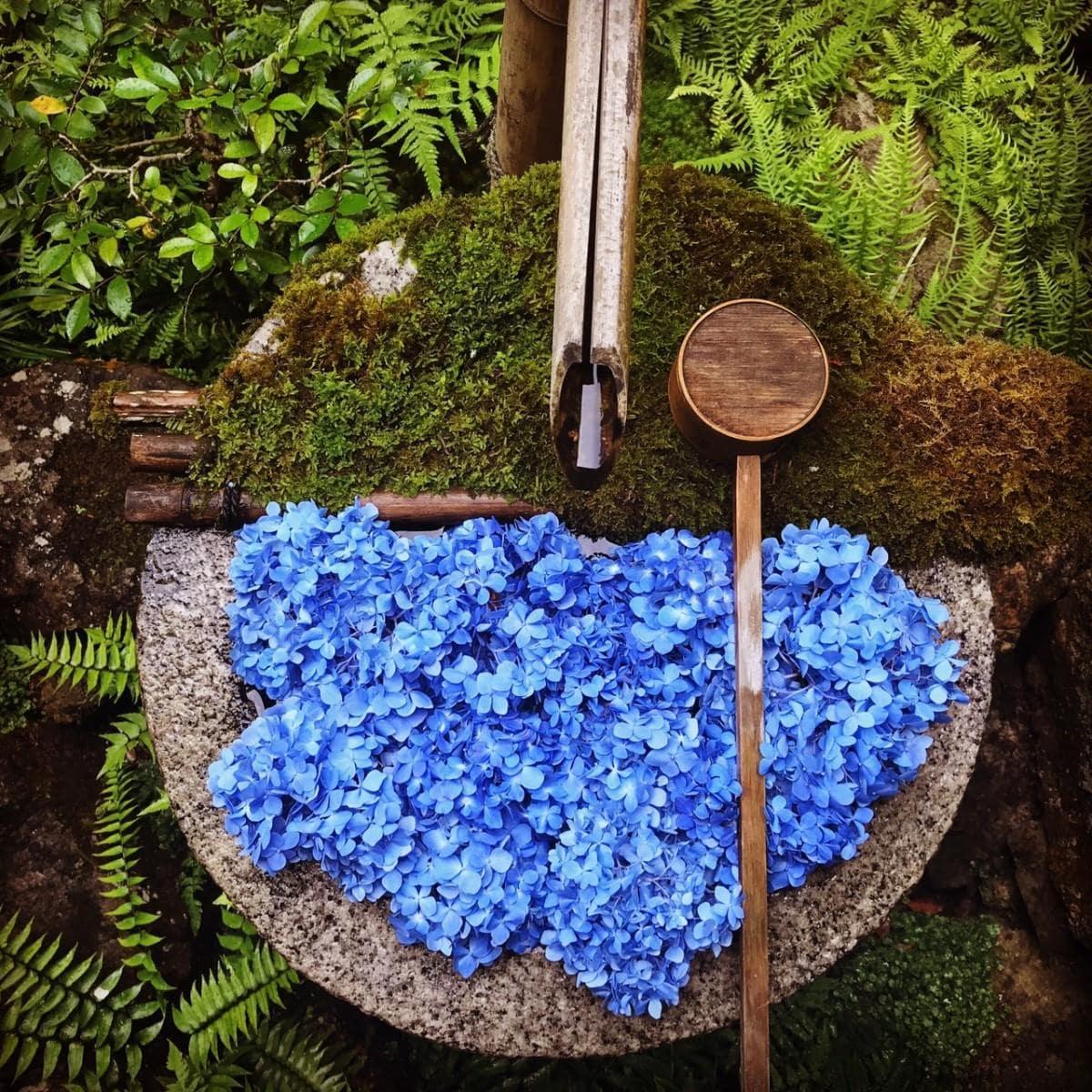 柳谷観音・楊谷寺の手水鉢のアジサイアート