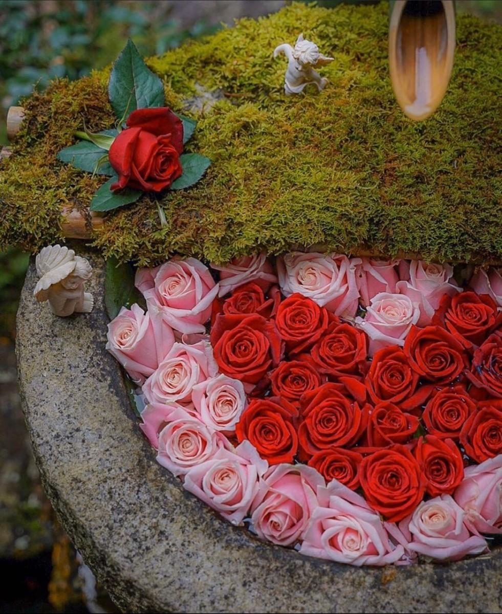 楊谷寺の手水鉢アート 2月はバラのハートバージョン