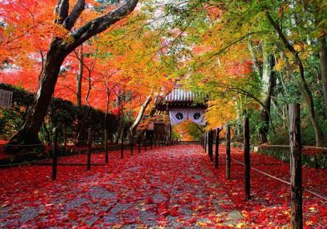 紅葉の長岡京・光明寺