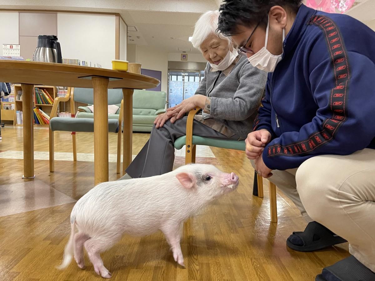 マイクロ豚「ぶーちゃん」と触れ合う入居者とスタッフの臼井勇矢さん