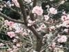 長岡京の花の名所「長天さん」で梅花祭 梅が見頃に