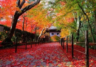 長岡京・向日・洛西エリアで「ツール・ド・西山」 見頃の紅葉名所巡る