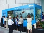 銀座に夏の風物詩「沖縄美ら海水族館」-巨大水槽に700匹の魚