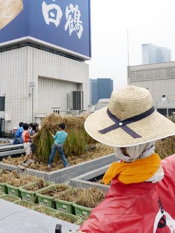 かかしが見守るビル屋上で育った銀座米の稲刈りが行われた。天日干しにした稲を子どもたちが囲む