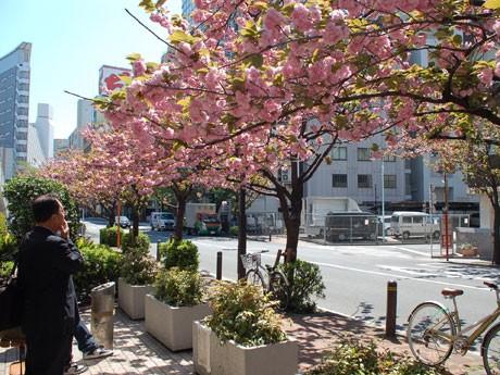 通りに設置された休憩場には桜を楽しむ人々が集まっている
