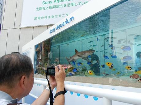 14トンの水が入った屋外水槽に、約300匹の海の生き物たちが泳ぎまわる