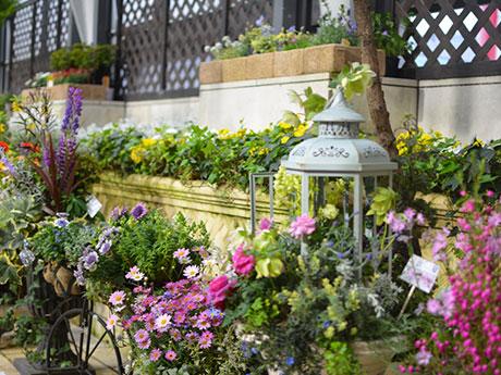 ファンケル銀座スクエア「空中庭園」に春の花 コンテナガーデンコンテストも
